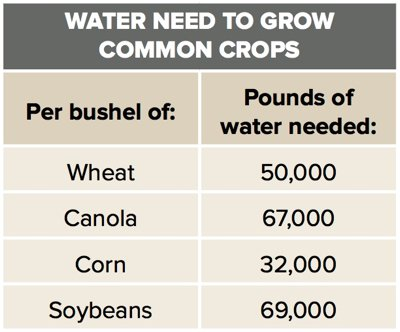 Water Need to Grow Common Crops